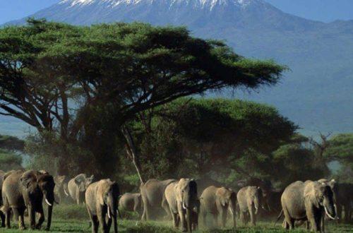 10 Objek Wisata di Kenya Wajib Anda Kunjungi
