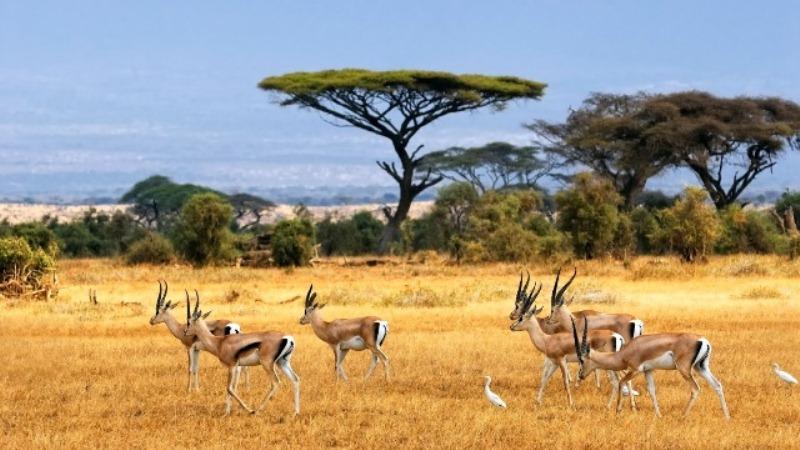 10 Hal Yang Perlu Diketahui Sebelum Bepergian ke Afrika Timur