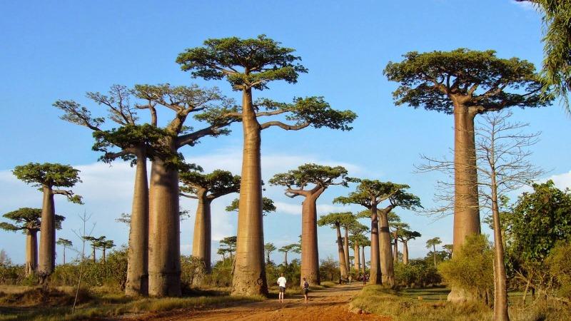 10 Tempat Wisata Terbaik di Madagaskar